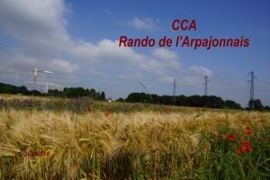 2014-06-15 Rando de l_Arpajonnais