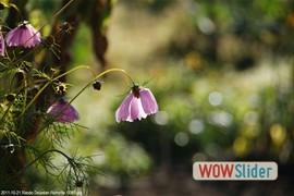 20111021_rando_dourdanroinville__0061